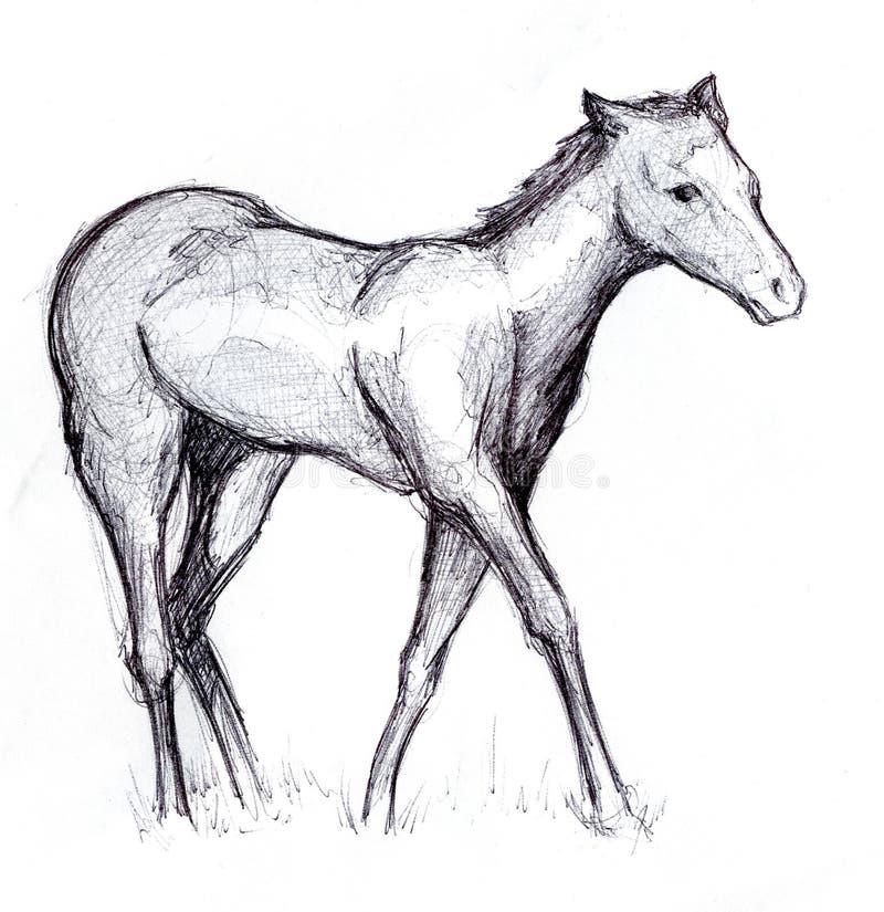 1张马草图 库存照片