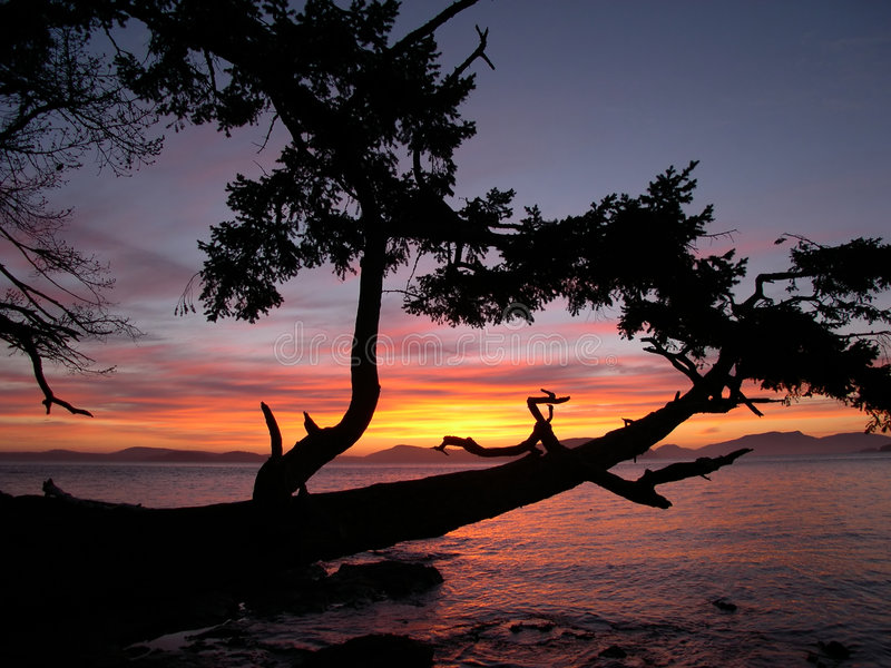 Download 1日落 库存图片. 图片 包括有 影子, 日出, 结构树, 日落, 小珠靠岸的, 海景, 对比, 横向, 海洋 - 60179