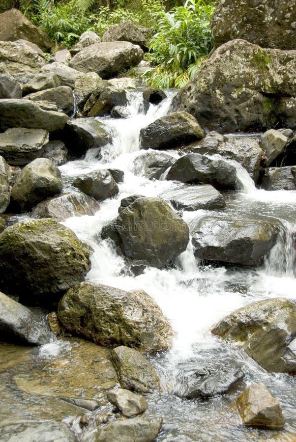 1森林雨瀑布 图库摄影
