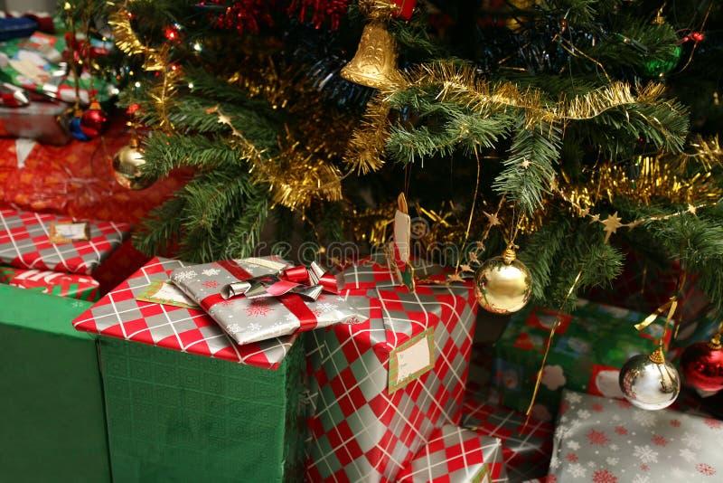 1棵圣诞树 库存照片