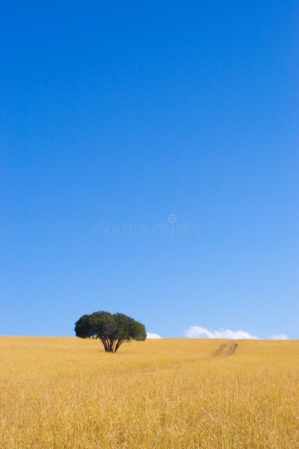 1海角结构树 免版税库存图片