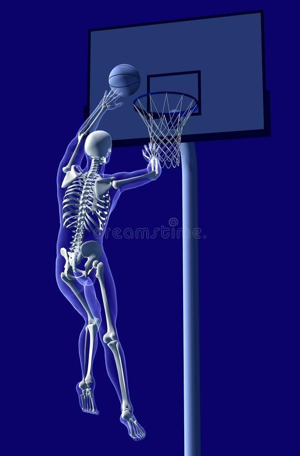 1解剖学篮球 库存例证