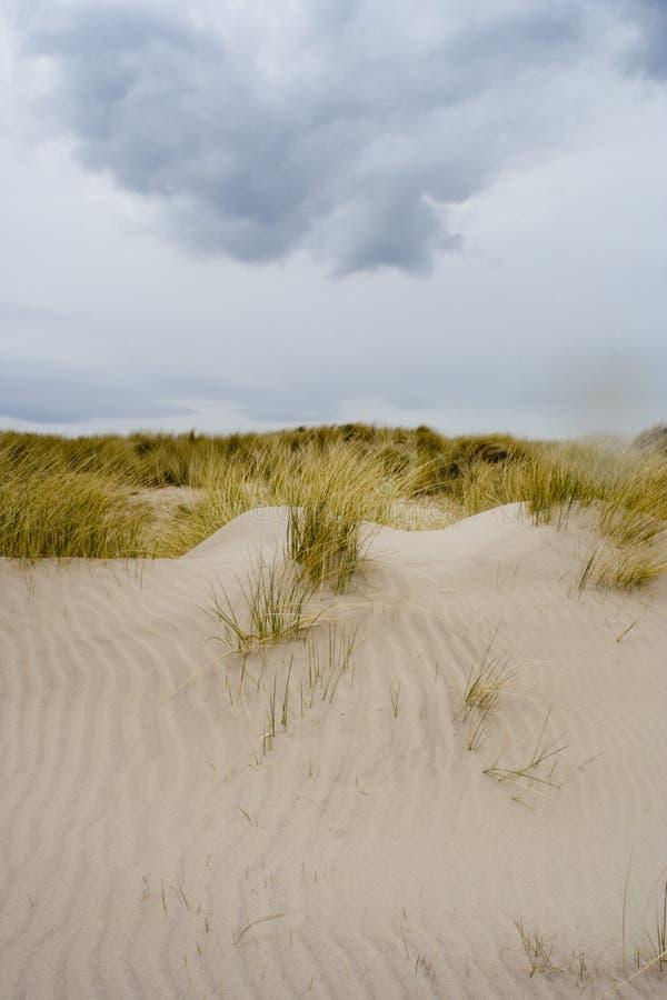 1 άμμος αμμόλοφων στοκ εικόνες