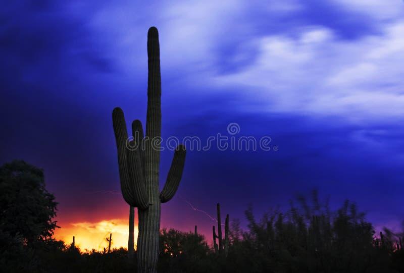 1 εθνικό saguaro πάρκων στοκ φωτογραφία