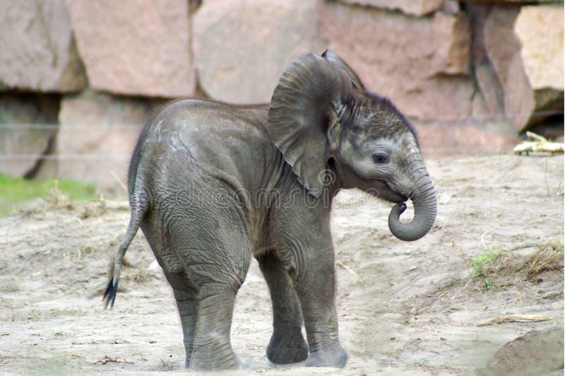 Download 1 ελέφαντας μωρών στοκ εικόνα. εικόνα από πλήρης, camera - 799383
