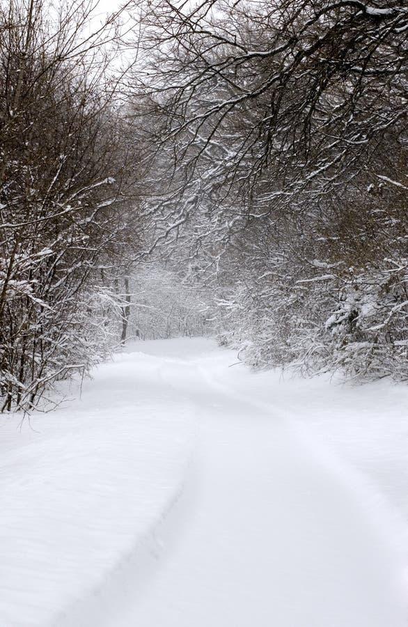 Download 1 καλυμμένο ίχνος χιονιού στοκ εικόνα. εικόνα από ειρηνικός - 398117
