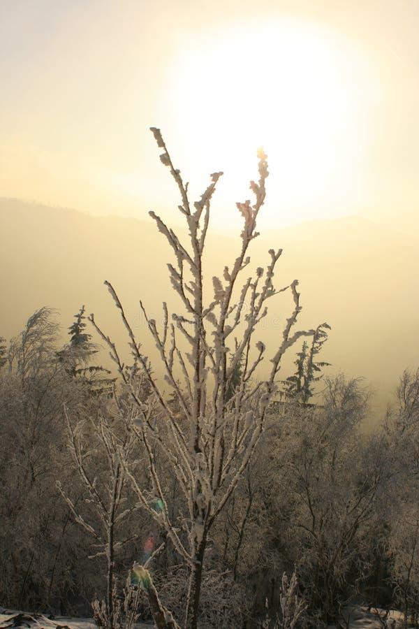 1 κανένας χειμώνας ηλιοβασιλέματος στοκ φωτογραφία