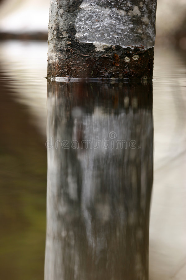 Download 1 κορμός δέντρων αντανάκλασης Στοκ Εικόνα - εικόνα: 121735