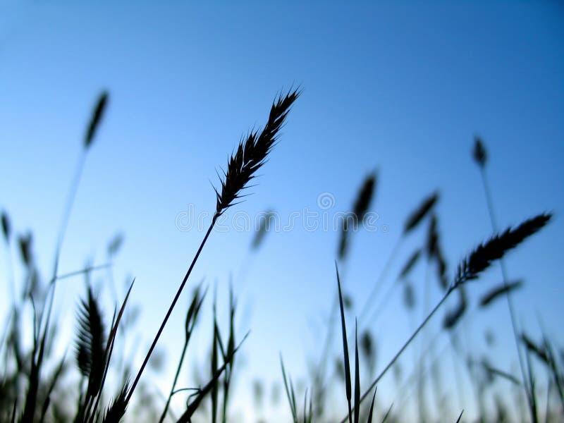 1 σκιαγραφία φυτών στοκ εικόνες