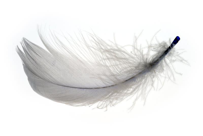 1 φτερό στοκ φωτογραφία