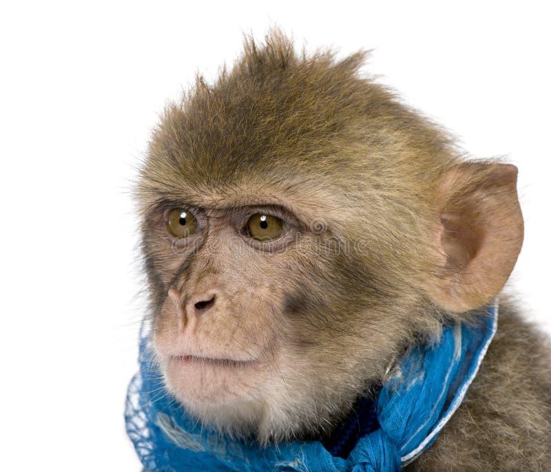 1 детеныш года sylvanus macaque macaca barbary старый стоковые фото