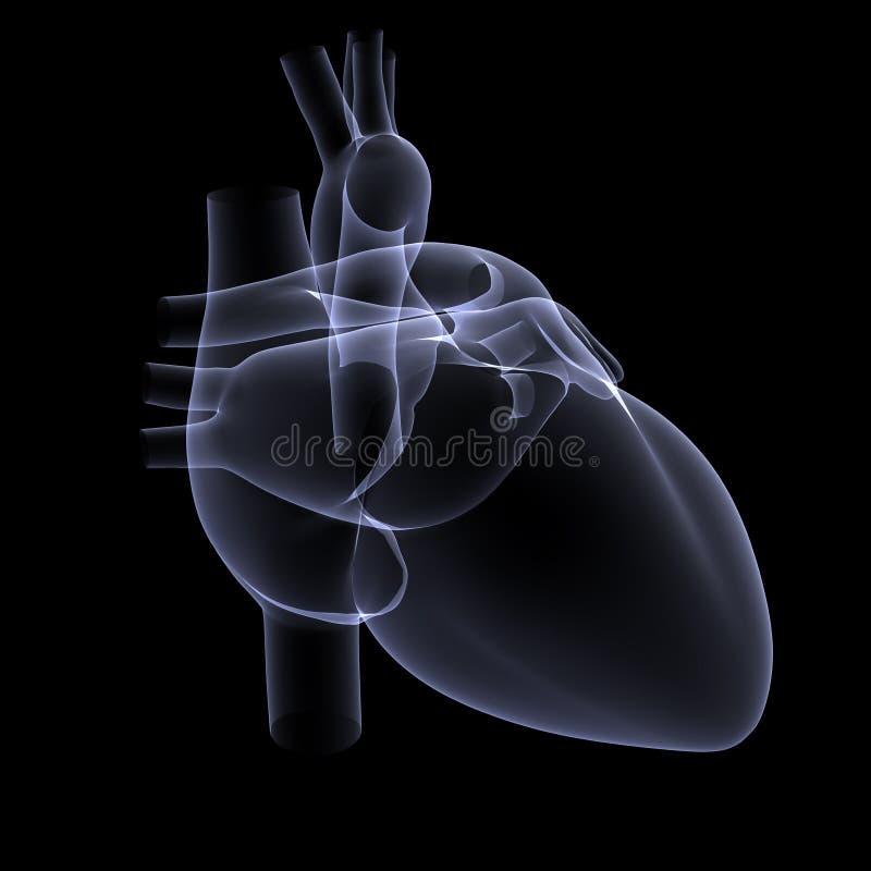1 луч сердца x стоковая фотография
