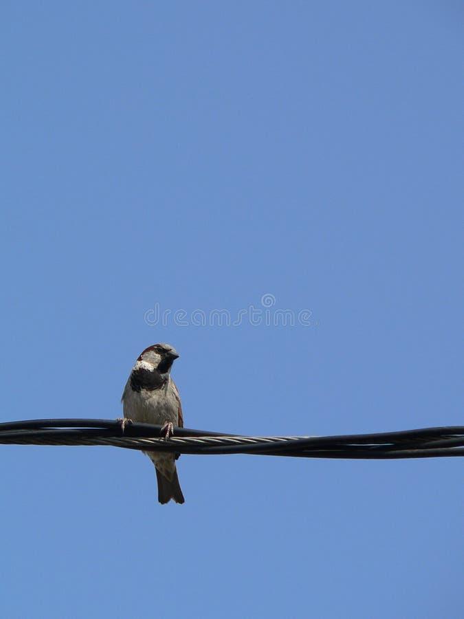 1 небо птицы голубое маленькое стоковая фотография rf