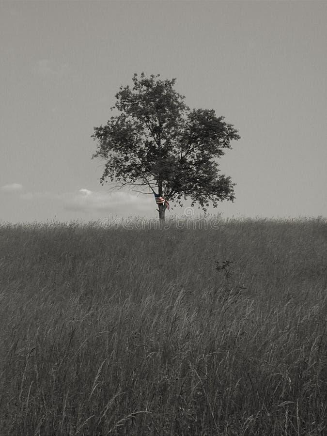 1 одиночество свободы Bw Стоковая Фотография