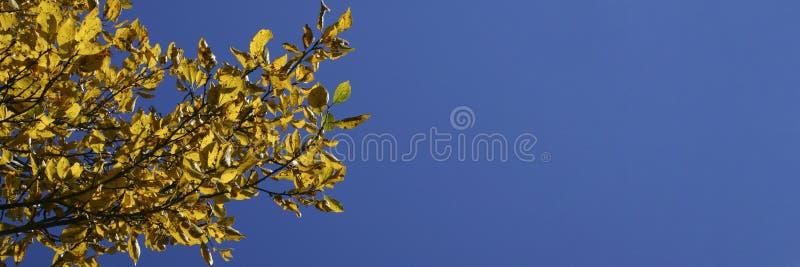 1-ое октября стоковое изображение rf