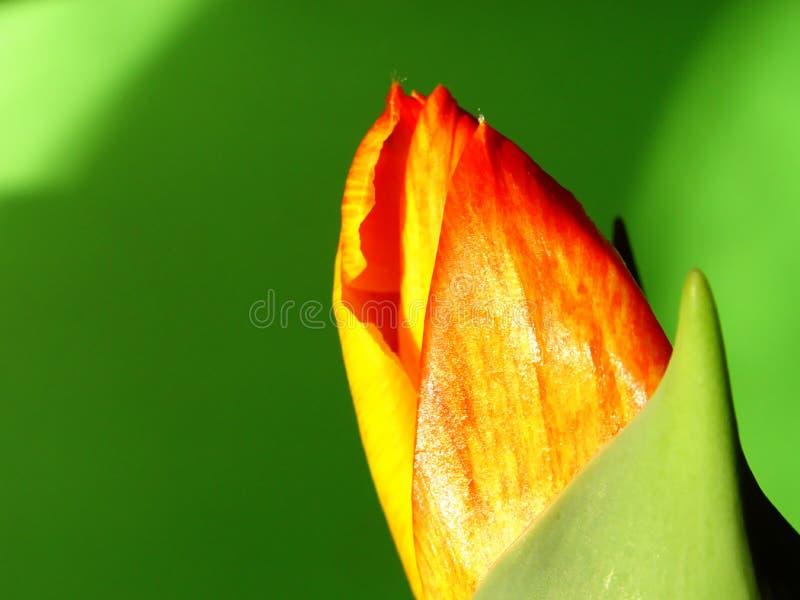 1 приходя вне весна S Стоковое Фото