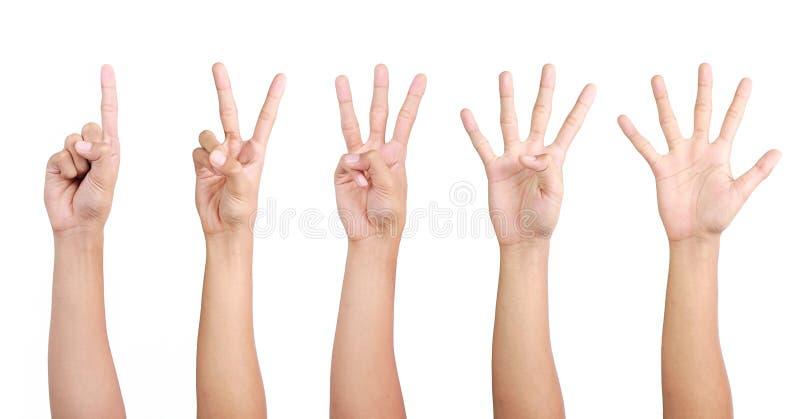 1 рука 2 3 4 5 стоковые изображения rf