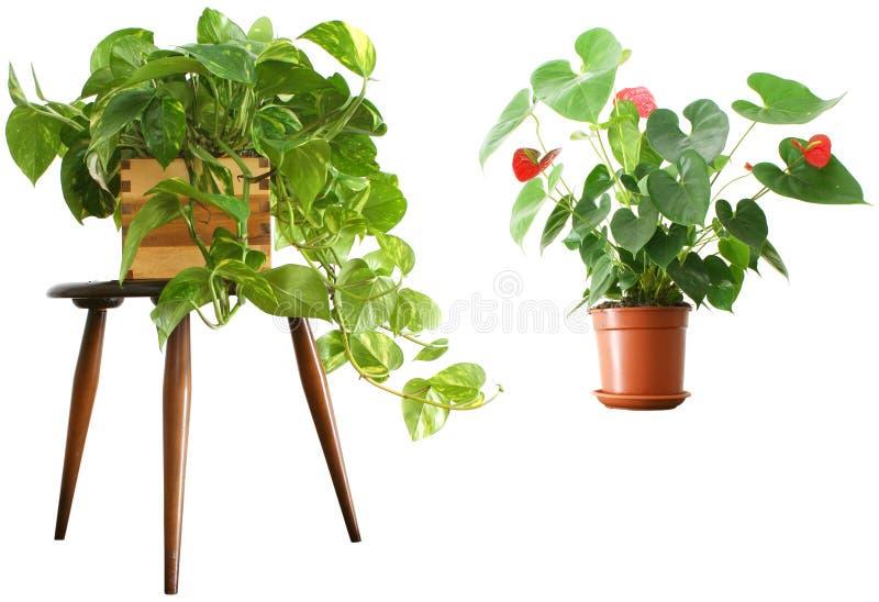 1 2 houseplants arkivbild