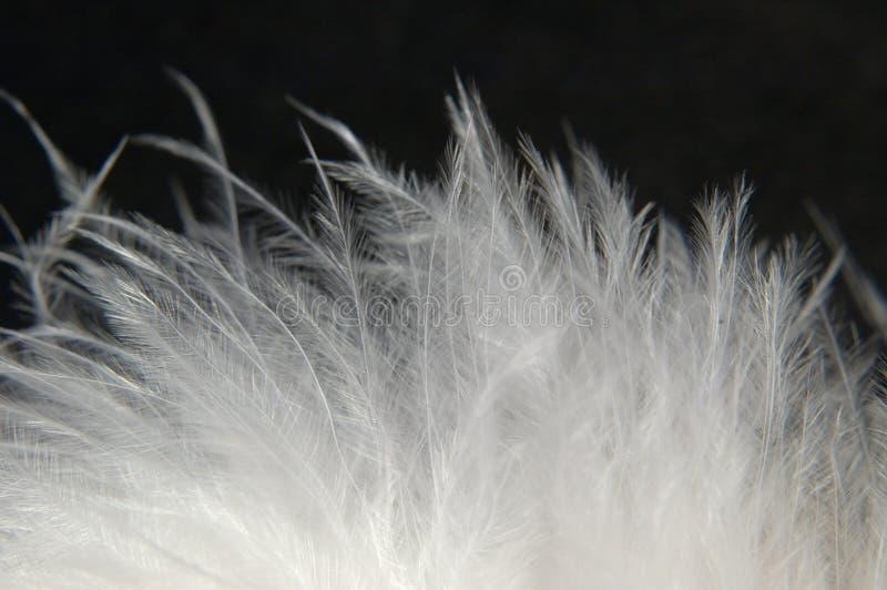 1柔软的羽毛 库存照片