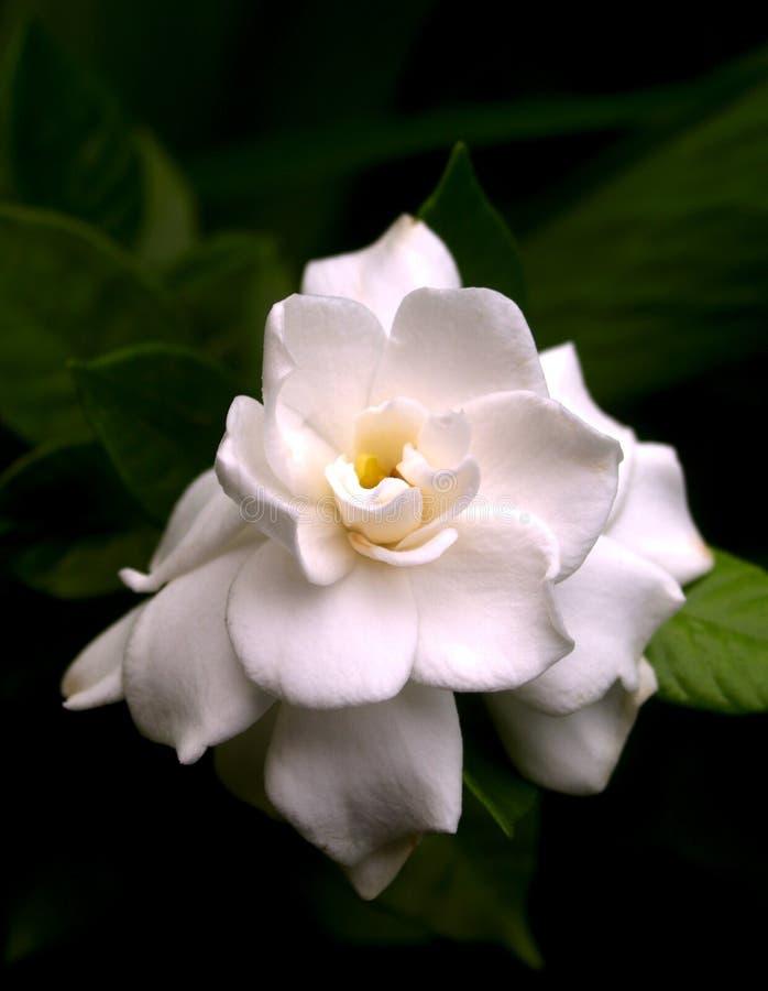 1 blomma arkivfoto