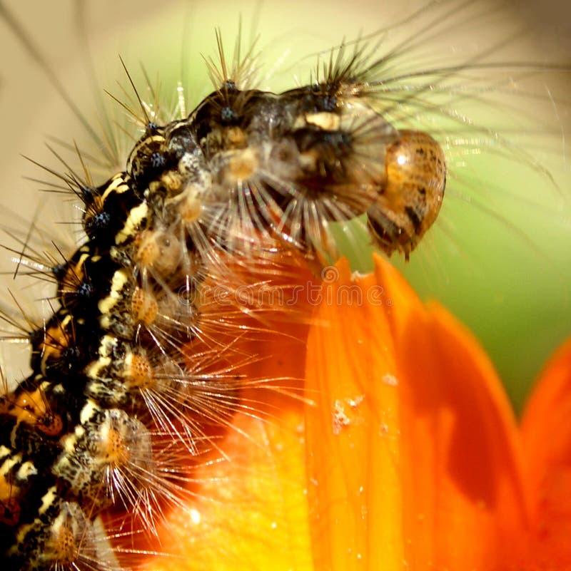 1 Caterpillar Royaltyfria Foton