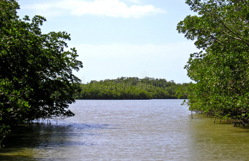 1 everglades mangrove swamp стоковая фотография