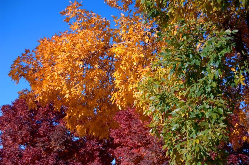 1 färgfall arkivfoto