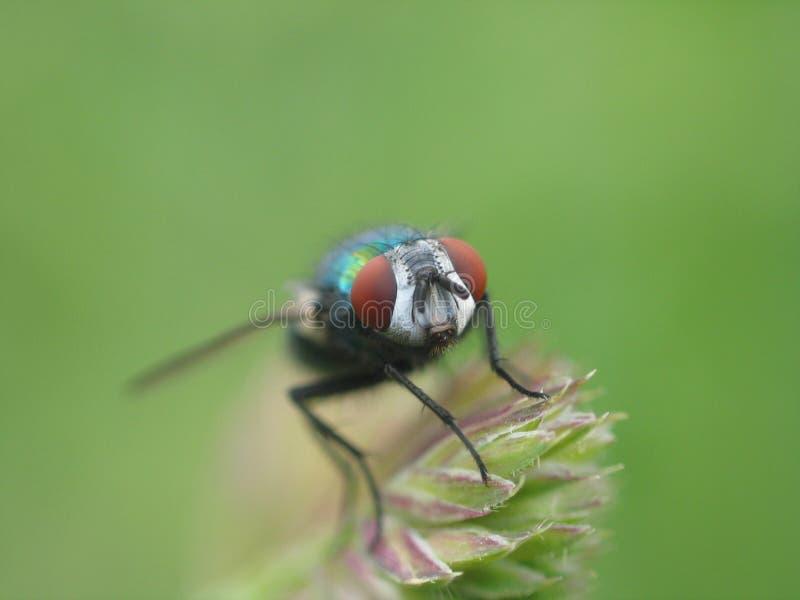 1 fluga arkivfoton