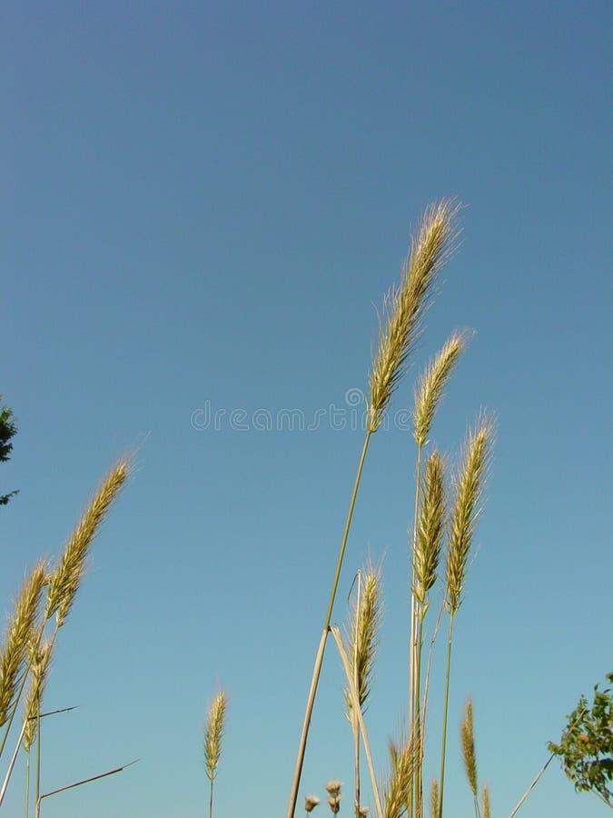 Download 1 grässky arkivfoto. Bild av äta, skörd, fjäder, sommar - 519616