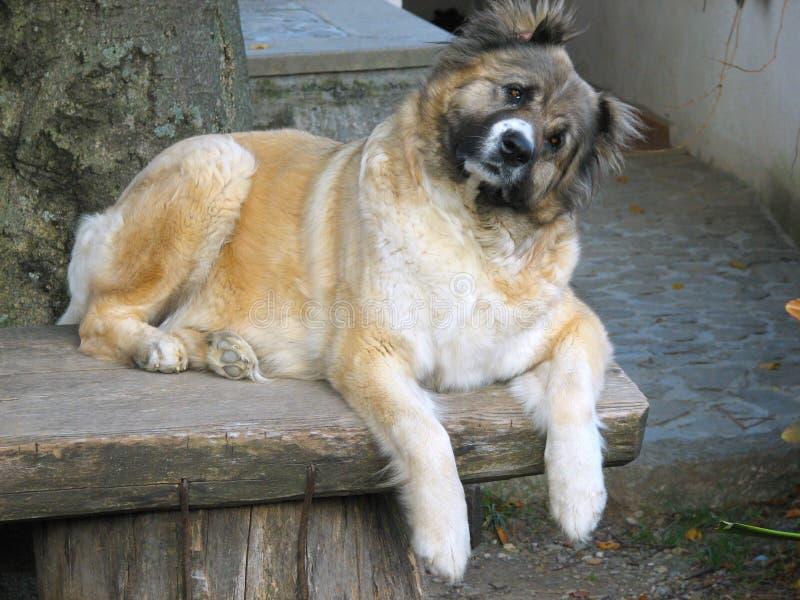 1 hundtabell arkivbild