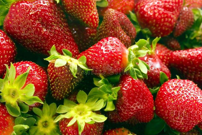 1 jordgubbar vol royaltyfria bilder