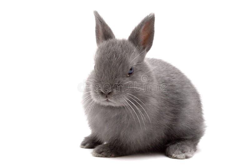 1 kanin royaltyfri fotografi