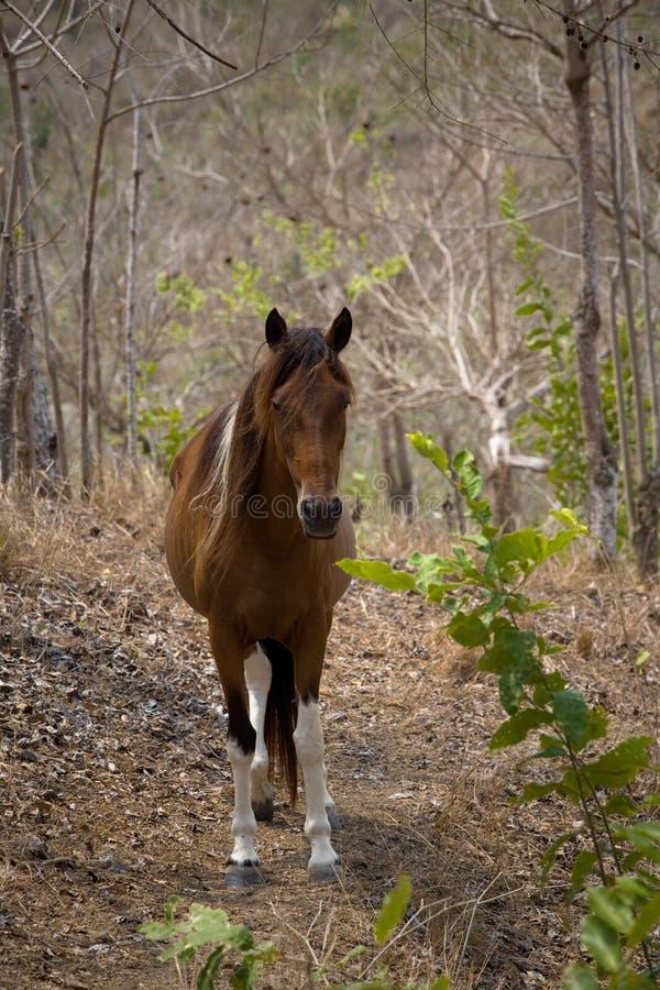 1 konia zdjęcia stock
