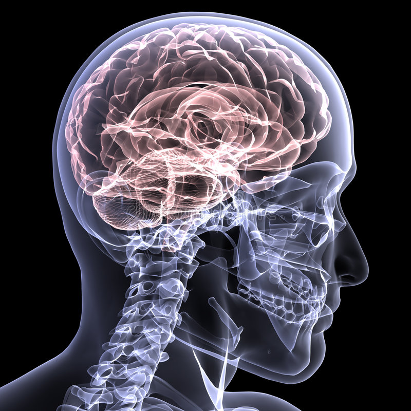 1 mózgu szkielet promieni x ilustracja wektor
