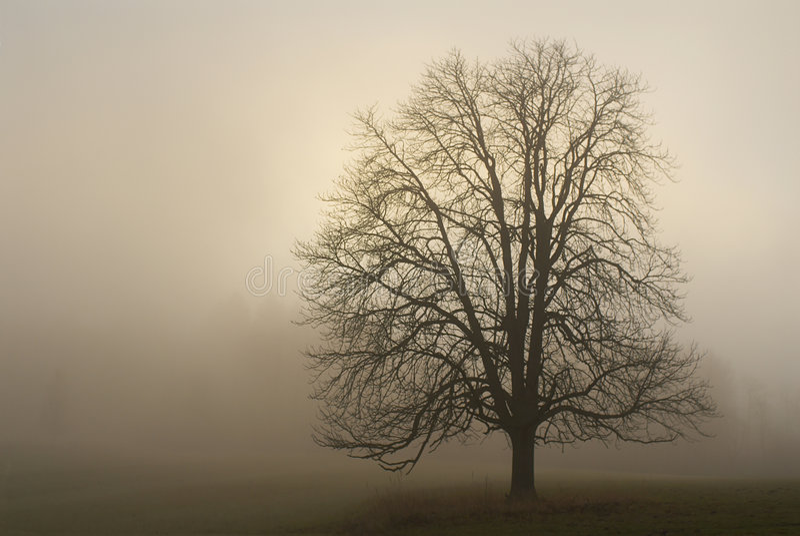 1 mgła. fotografia stock