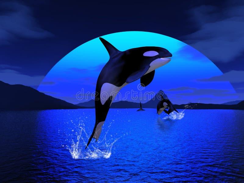 (1) orka royalty ilustracja