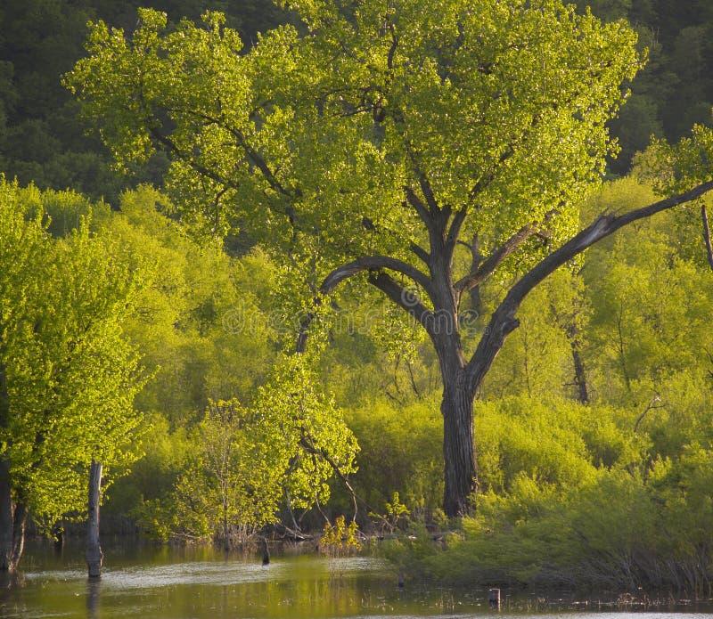 1 psalmu drzewo zdjęcie royalty free