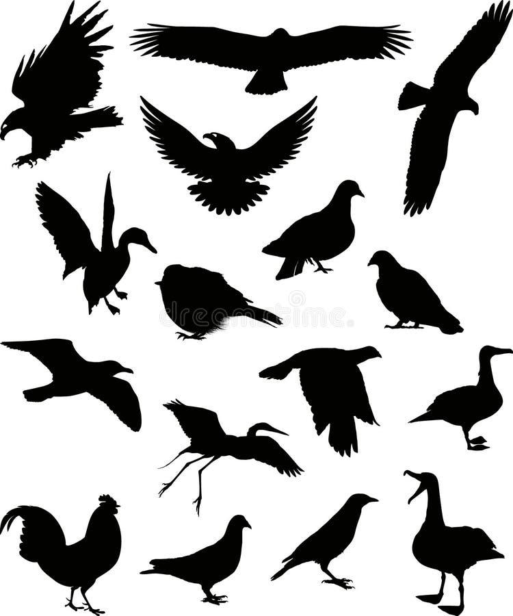 (1) ptaków sylwetki wektor royalty ilustracja