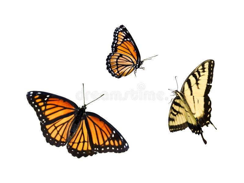 1 samling för 3 fjäril vektor illustrationer