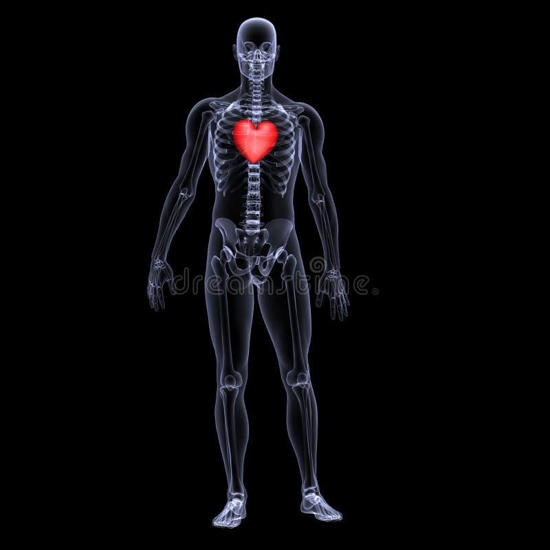 1 skelett- valentin x för hjärtastråle royaltyfri illustrationer