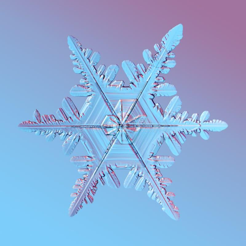 1 snowflake στοκ εικόνες