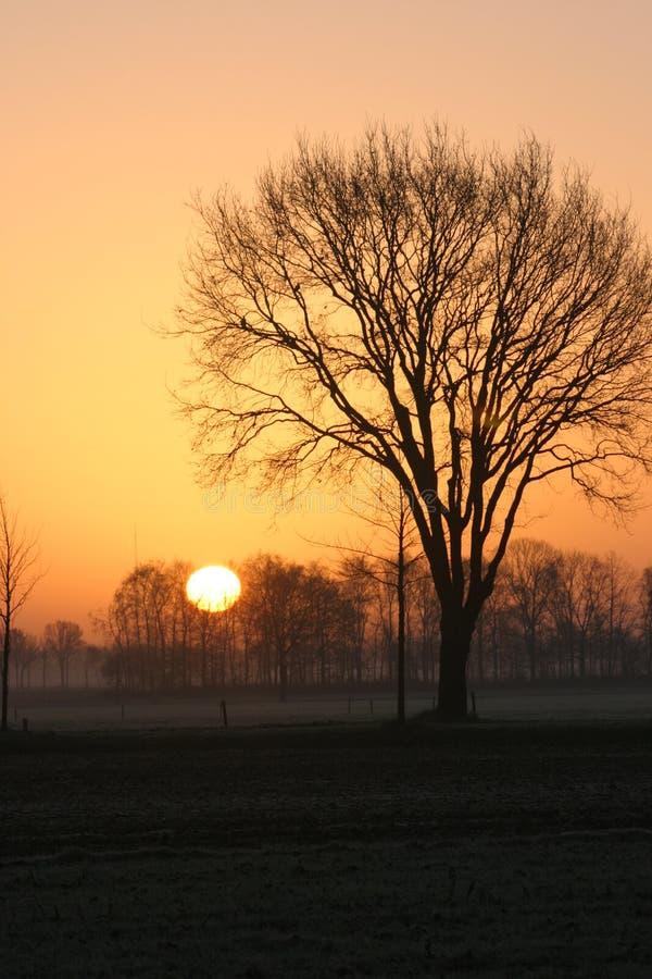 1 sylwetkowy drzewo obrazy stock