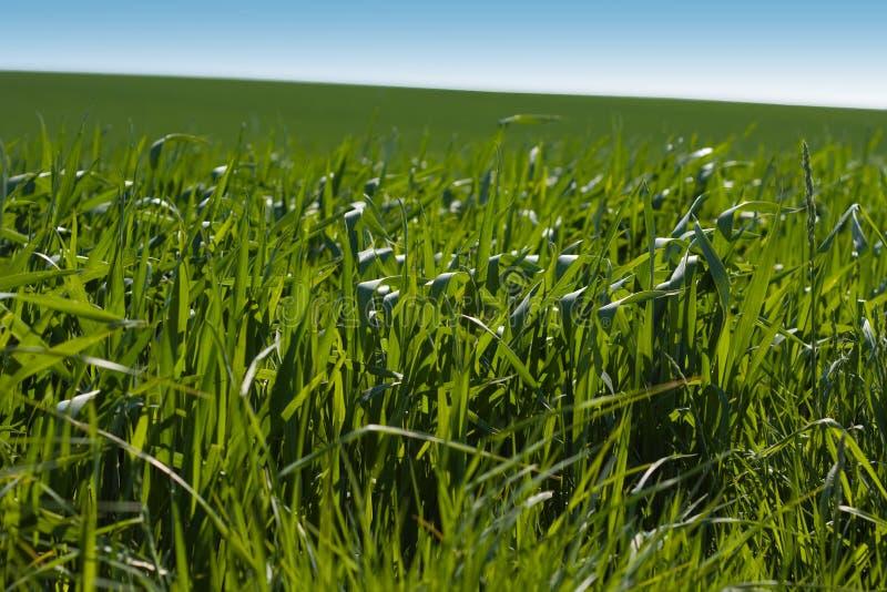 1 trawy. zdjęcie royalty free
