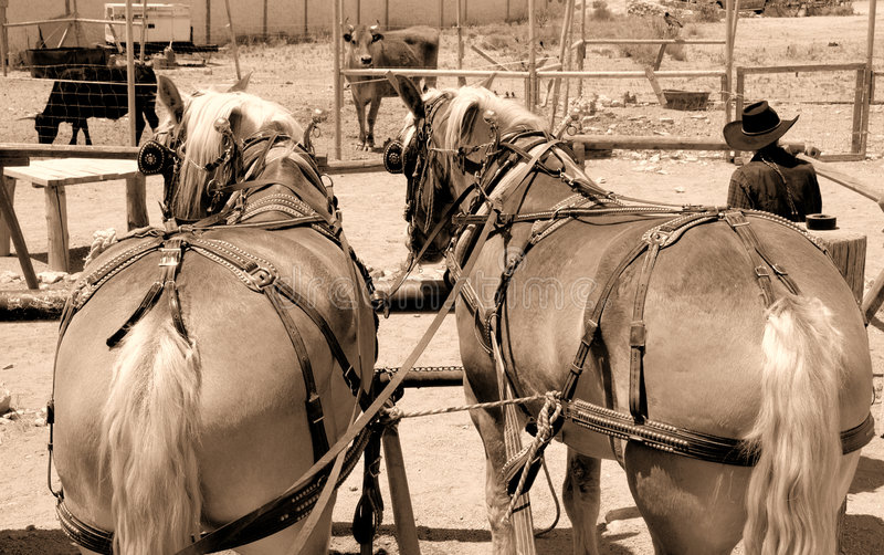 1 wild west zdjęcie stock