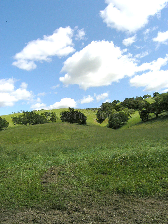 1 winnica firestone krajobrazu fotografia stock