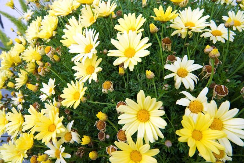 1 wiosna kwiat fotografia royalty free