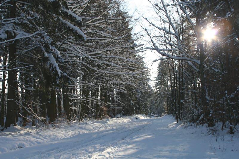 1 zimy. obraz stock