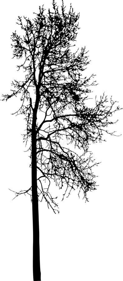 10查出的剪影结构树 皇族释放例证
