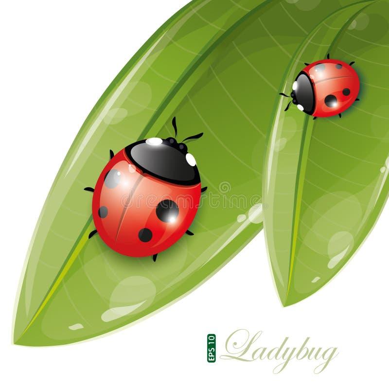 10片设计eps绿色瓢虫叶子 向量例证