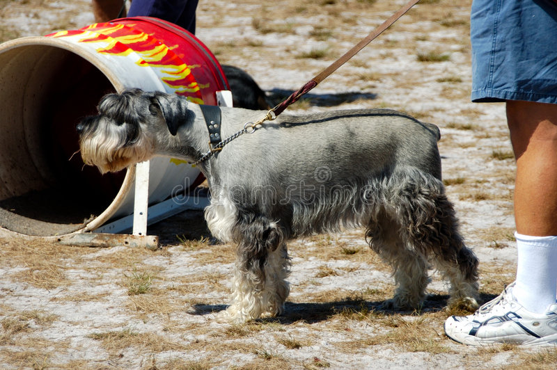 10 собак Стоковое Фото